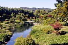 Bambu japonês de Anduze do parque do jardim Imagem de Stock