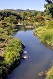 Bambu japonês de Anduze do parque do jardim Fotos de Stock
