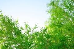 Bambu lämnar Royaltyfri Bild