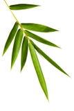 Bambu lämnar isolerat royaltyfri bild