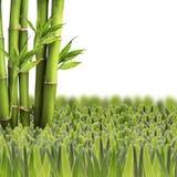 Bambu med grönt gräs på vit bakgrund Royaltyfri Bild