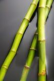 Bambu med vatten Royaltyfri Bild
