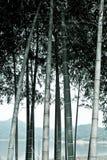 Bambu Monotone fotografia de stock
