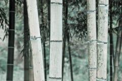 Bambu Monotone Fotos de Stock Royalty Free