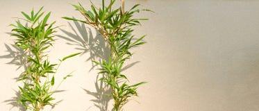 bambu nära den slappa väggen Royaltyfri Fotografi