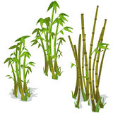 Bambu no fundo branco Vetor isolado Fotografia de Stock Royalty Free