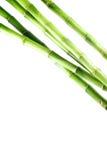 Bambu no fundo isolado branco Imagens de Stock Royalty Free