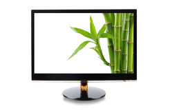 Bambu no monitor Fotos de Stock Royalty Free
