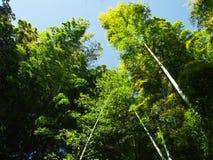 Bambu no parque do castelo Foto de Stock