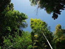 Bambu no parque do castelo Imagens de Stock Royalty Free