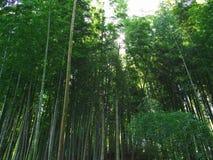Bambu no parque do castelo Fotos de Stock