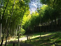 Bambu no parque do castelo Fotografia de Stock Royalty Free