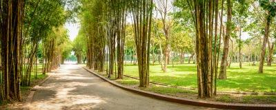 Bambu no parque do ` s dos povos, Yangon, Myanmar fotografia de stock royalty free