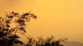 Bambu no por do sol Fotografia de Stock