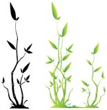 Bambu novo Imagens de Stock Royalty Free
