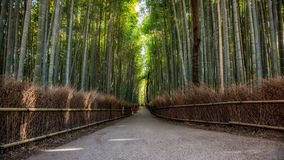 Bambu o mais forrest Imagem de Stock Royalty Free