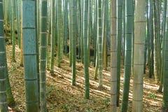 Bambu o mais forrest Imagem de Stock