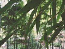 Bambu o mais forrest Foto de Stock Royalty Free