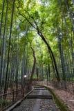 Bambu o mais forrest fotografia de stock