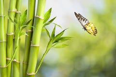 Bambu och fjäril Royaltyfri Fotografi