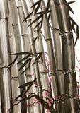 Bambu- och plommonträd Royaltyfria Foton