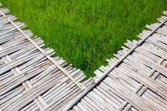 Bambu- och risfältbakgrund Arkivfoton