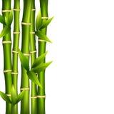 Bambu på en vit bakgrund Royaltyfria Bilder