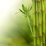 Bambu på sommarbakgrundsplats Arkivfoto