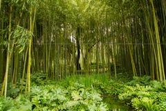Bambu på trädgården av nymphaen Arkivfoto