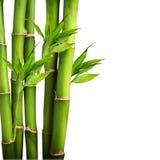 Bambu på vit bakgrund Arkivfoto