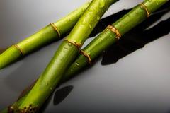 Bambu på vattenbakgrund Royaltyfri Bild