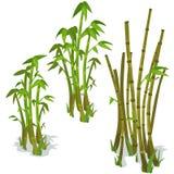 Bambu på vit bakgrund Isolerad vektor Royaltyfri Fotografi