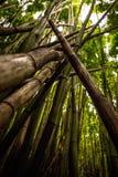 Bambu quebrado fotos de stock