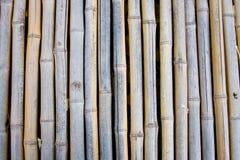 Bambu seco Imagens de Stock