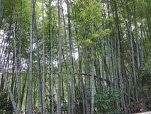Bambu skog Royaltyfri Fotografi