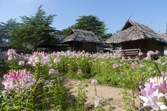 Bambu som f?rl?gga i barack med blommor i nordliga Thailand royaltyfria bilder