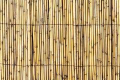 Bambu staket Texture royaltyfri fotografi