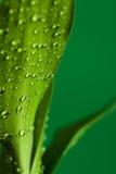 bambu tappar gröna leaves Fotografering för Bildbyråer