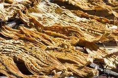 bambu torkade forar Arkivbilder