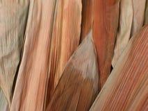 bambu torkade leaves Arkivfoto