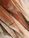 bambu torkade leaves Arkivbilder