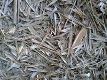 bambu torkade leaves Royaltyfri Fotografi