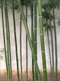Bambu verde na parede Fotos de Stock Royalty Free