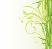 Bambu verde no fundo floral Fotos de Stock
