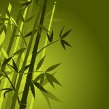 Bambu, vetor Imagem de Stock