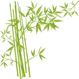 Bambu, vetor Fotografia de Stock Royalty Free