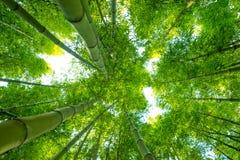Bambubakgrundsnatur Royaltyfria Bilder