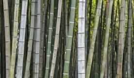 Bambubakgrundstapet arkivbild