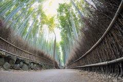 Bambubana av den Arashiyama sikten från låg vinkel royaltyfria bilder