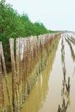 Bambubarriär Royaltyfri Bild